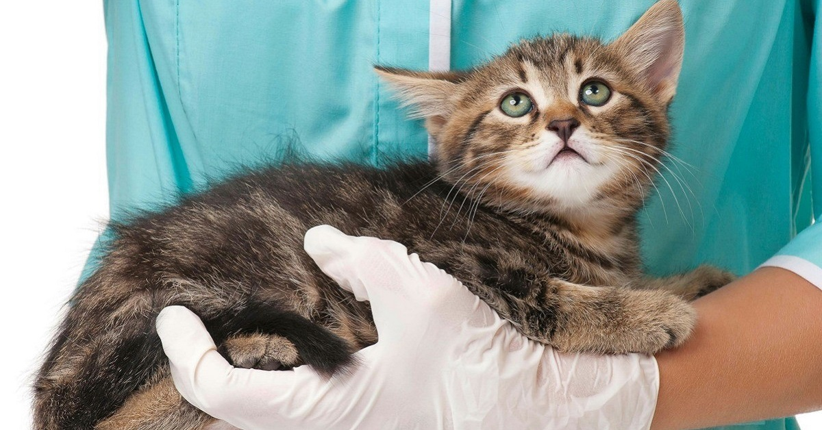 gatto dal veterinario