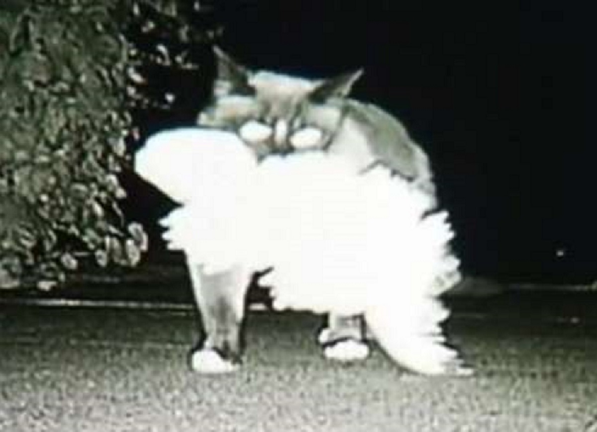 lucey gattina sparizioni biancheria