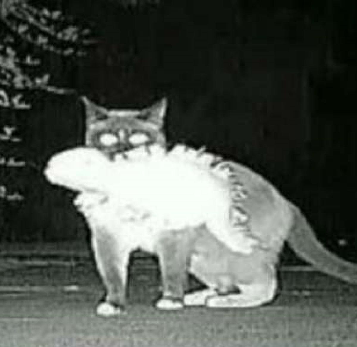 lucey gattina sparizioni in casa