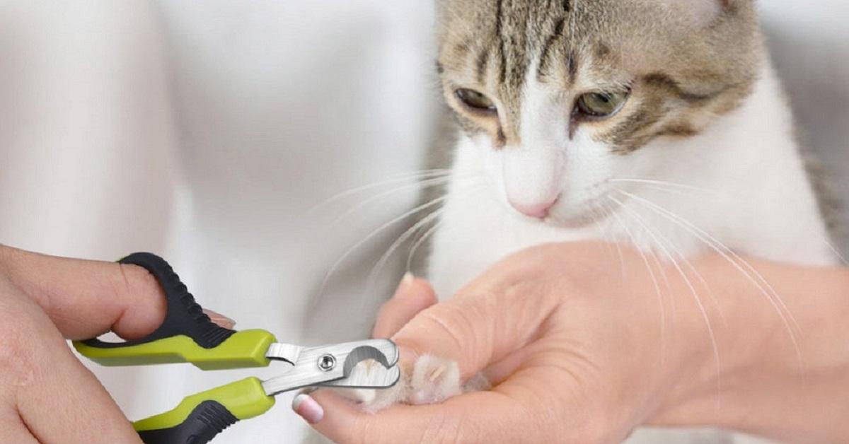 tagliare le unghie del gatto