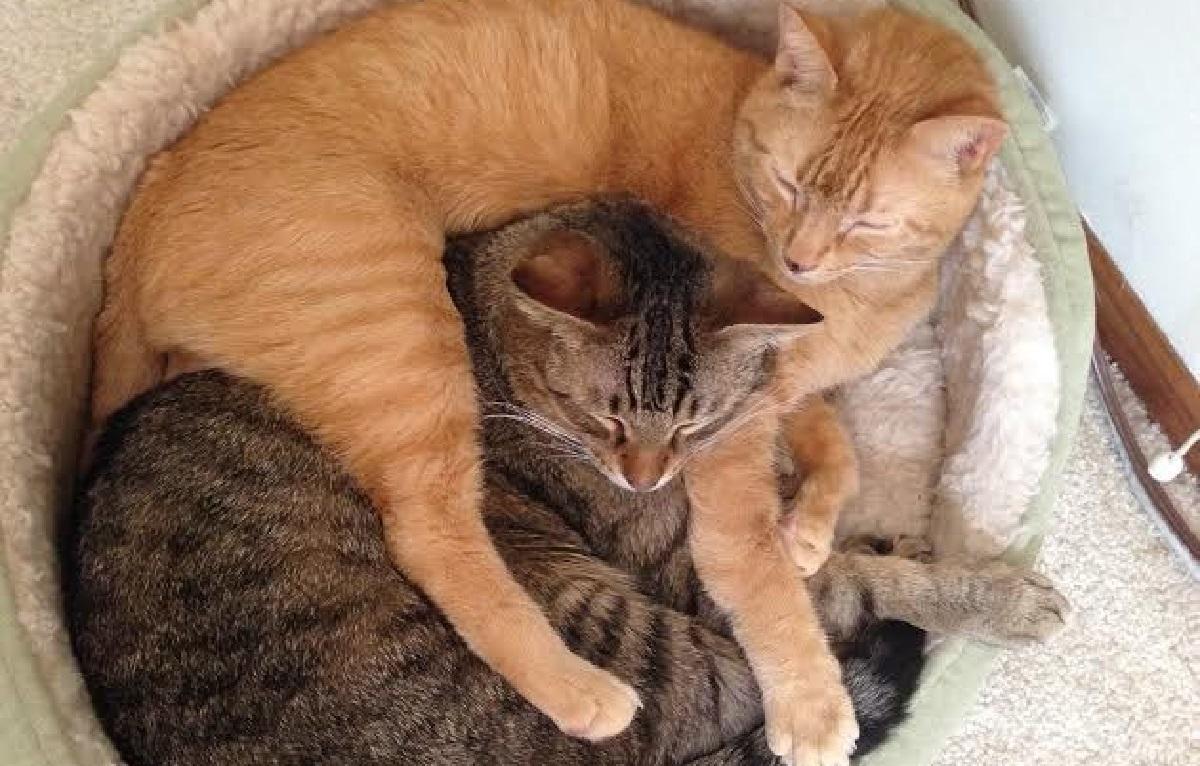 gatto amicizia foto