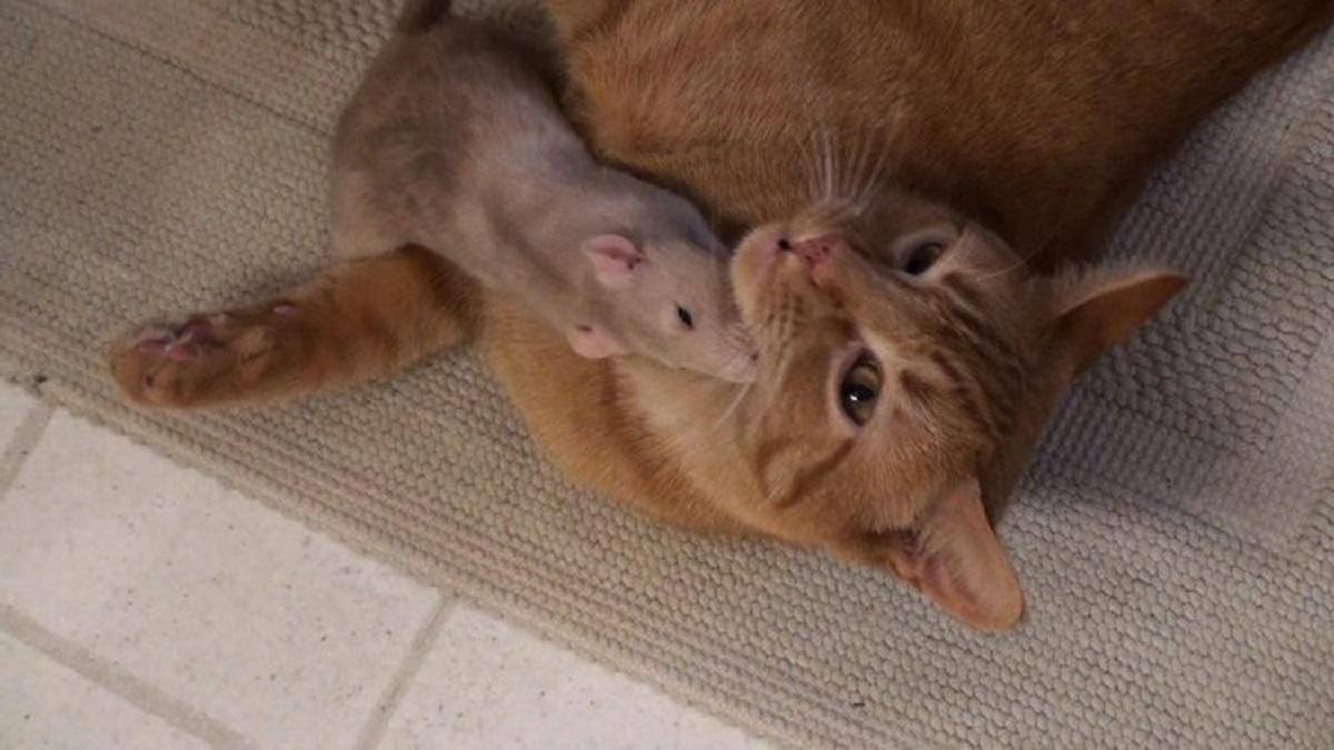 amicizia topolino micio
