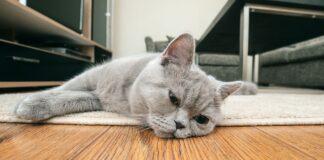 gatto disteso sul pavimento