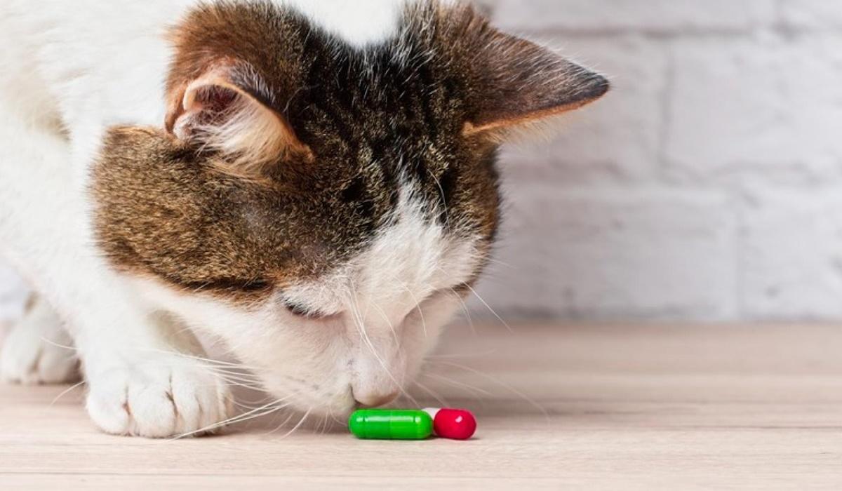 medicine per gatti
