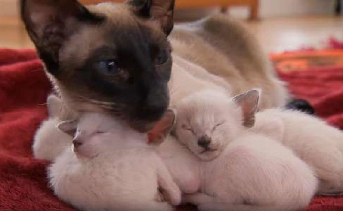 sandra gatta partorisce 3 piccoletti