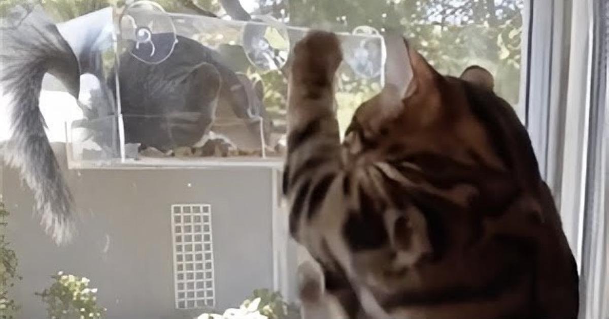 gatto cerca di prendere scoiattolo dietro il vetro
