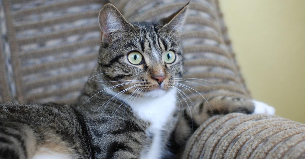 gatto in allarme