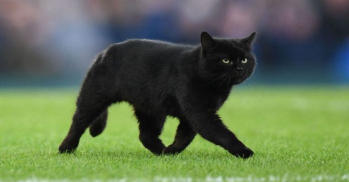 gatto entra in campo durante partita