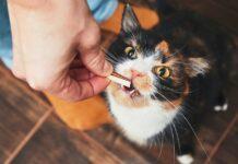 dare gli snack al gatto