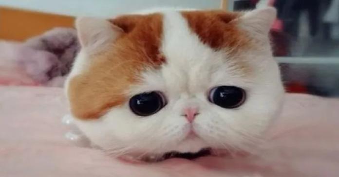 Snoopy gatto famoso