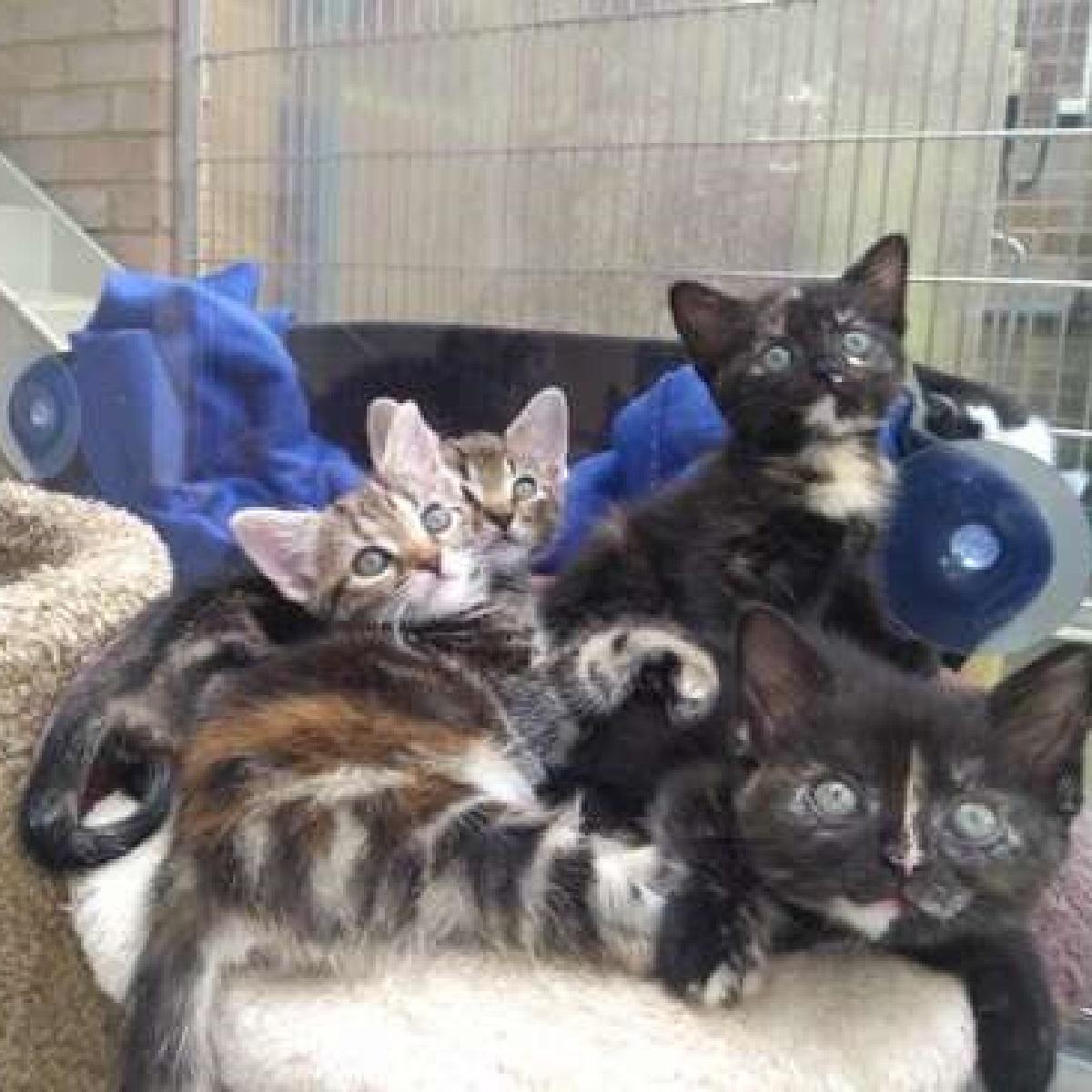 tommy gattini in cerca di casa