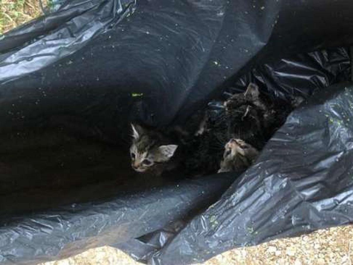tommy gattino fratellini abbandonati