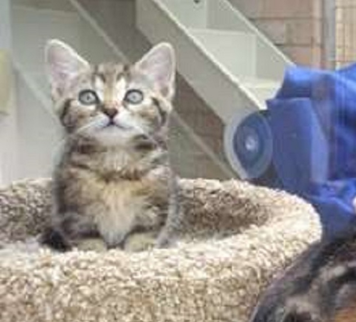 tommy gatto felice rifugio