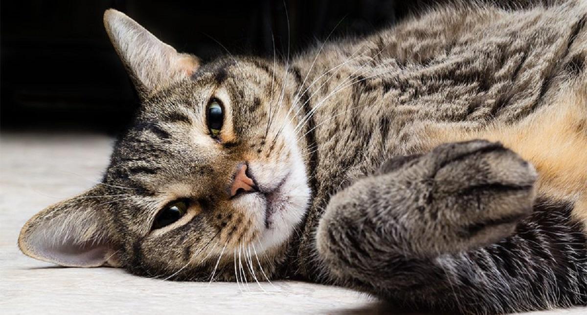 scavalcare muro gatto