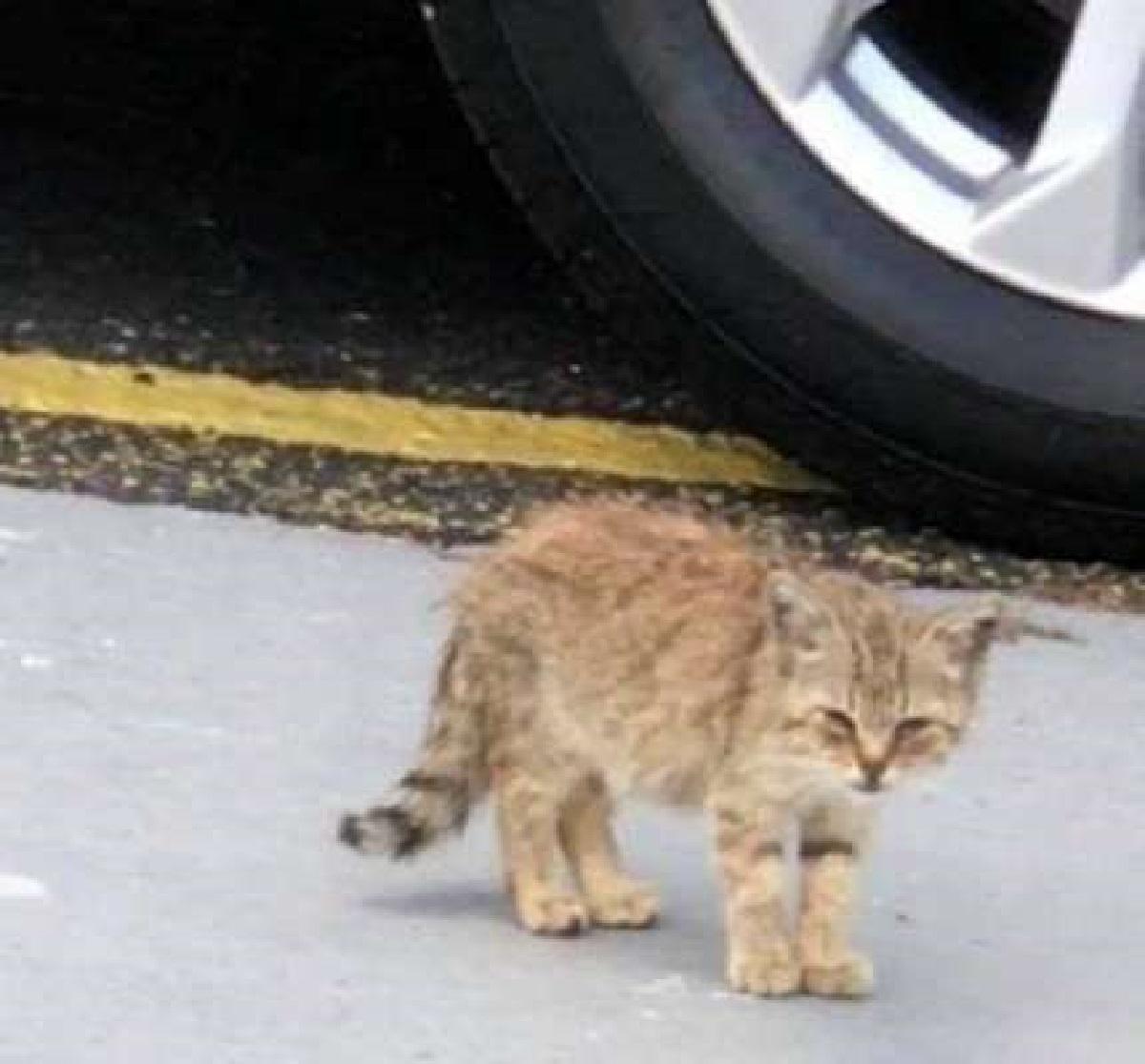 estrella gattina sola parcheggio