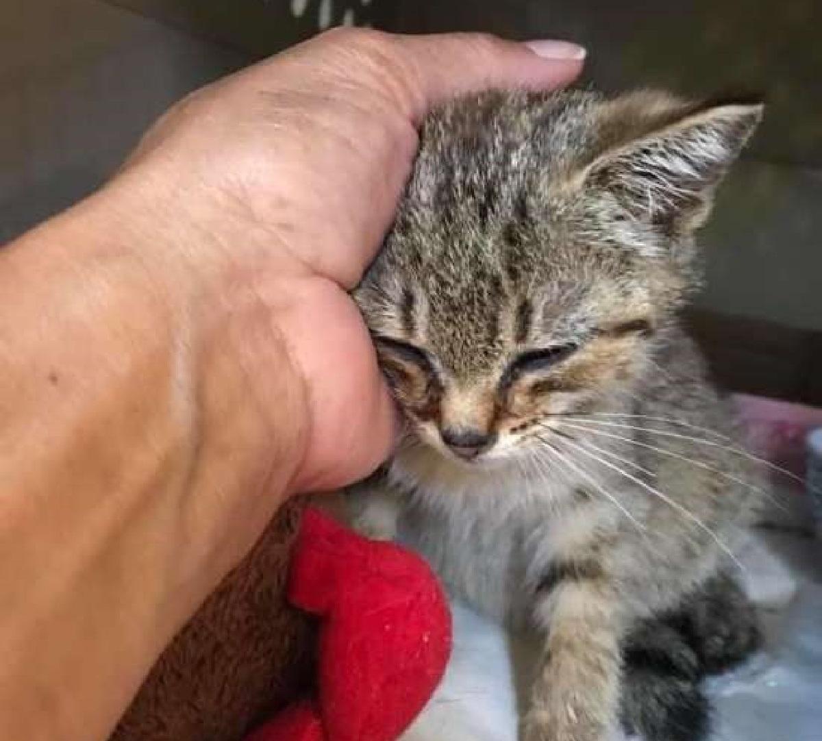 estrella gattina corsa veterinario