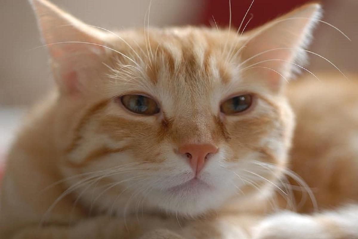 bagno lezione gattino