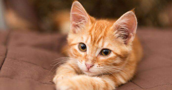gattino europeo bagno