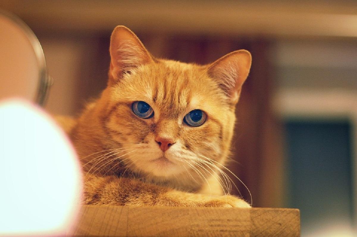 gattino arancione foto