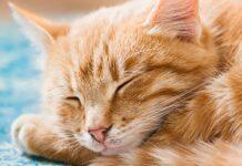 gattino puzzle dorme