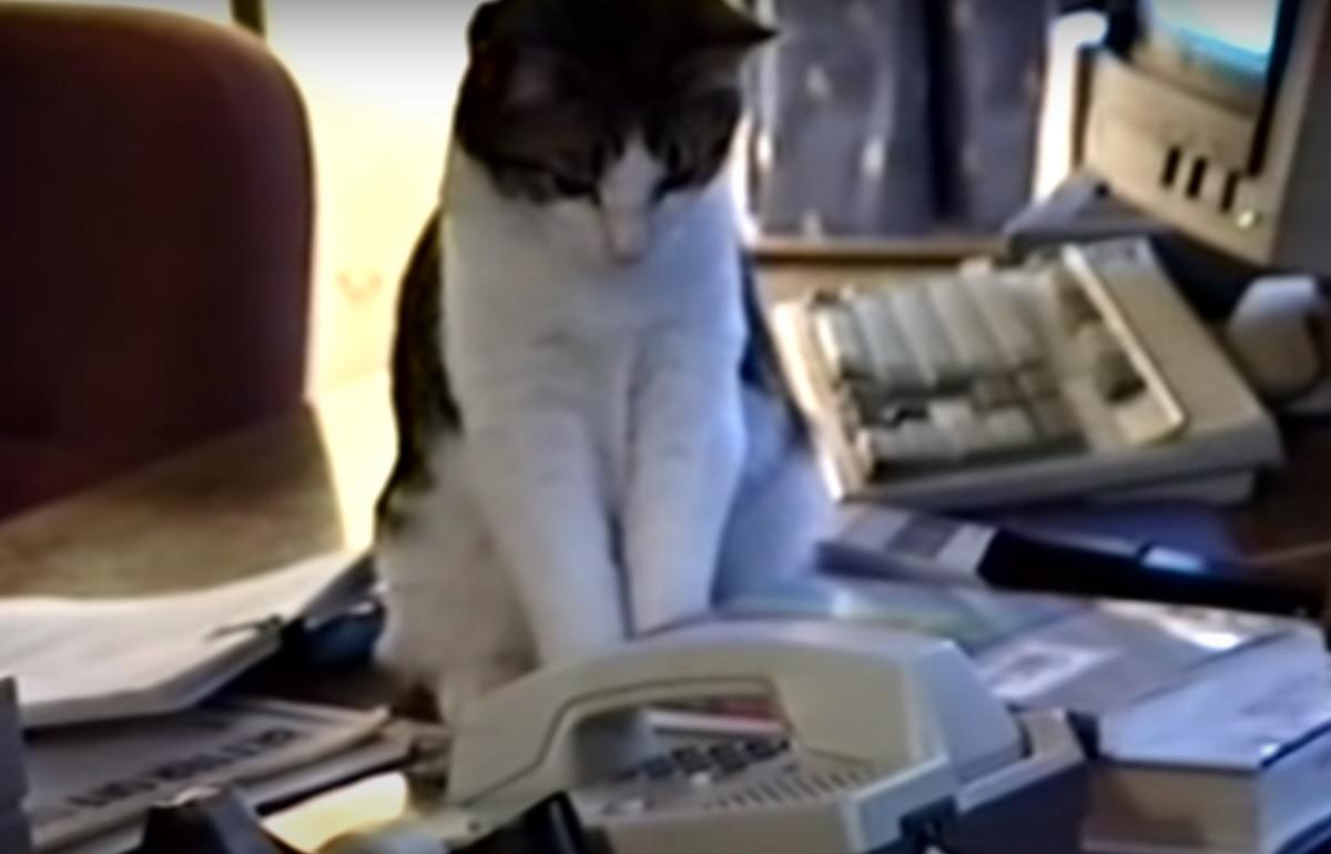 ufficio gatto risposta