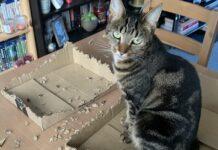 gattino biscotti scatola