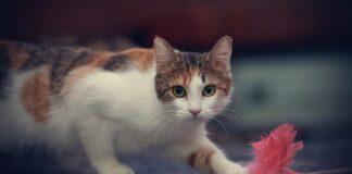 gattino spavento gruccia