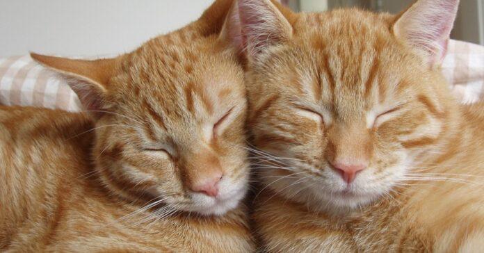 grappa scotch gattini