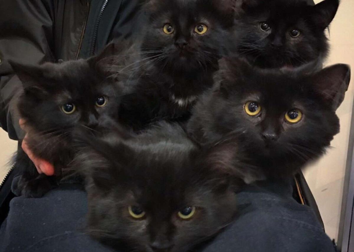 cuccioli gatti usagi