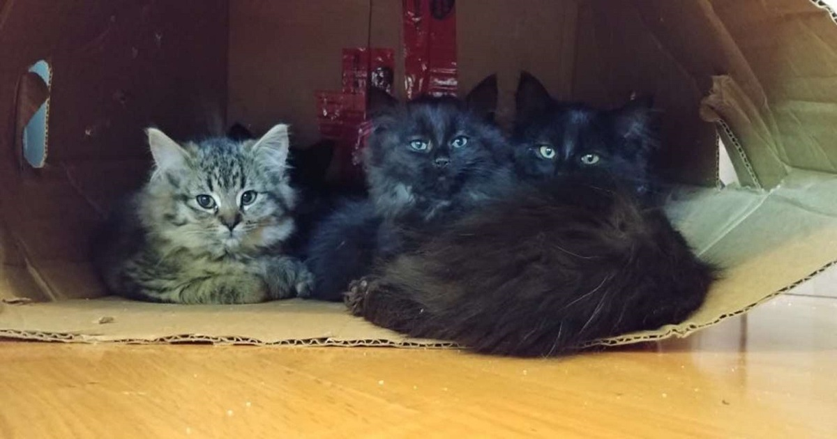 piccoli gattini aiuto