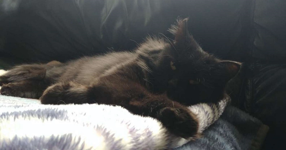 gattina nera foto