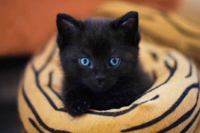 usagi gattina cuccioli