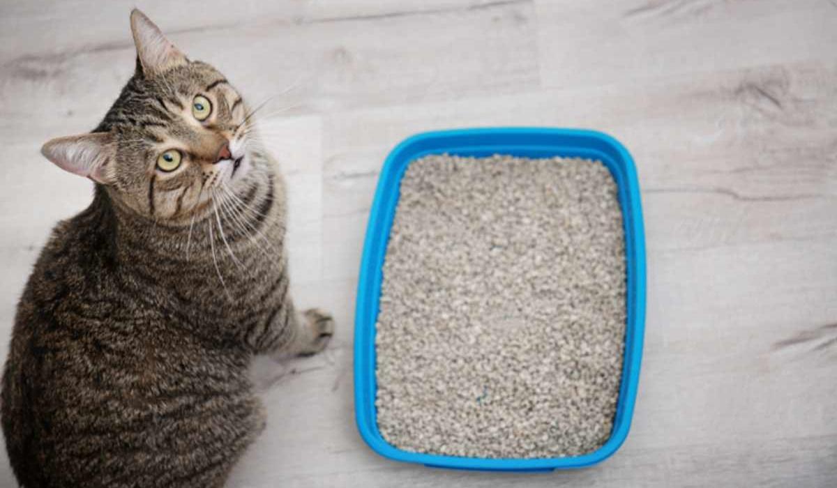 al gatto non piace la lettiera