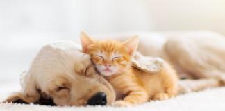 cane e gatto dormono insieme
