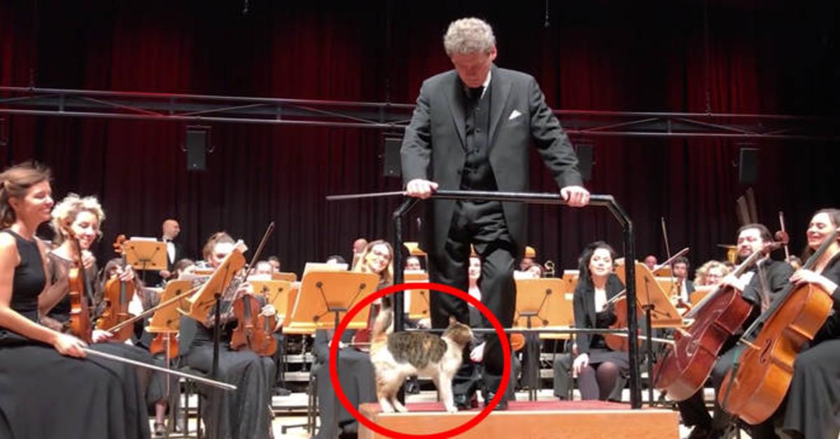 gatto sul podio del direttore