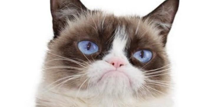 Grumpy cat arrabbiato