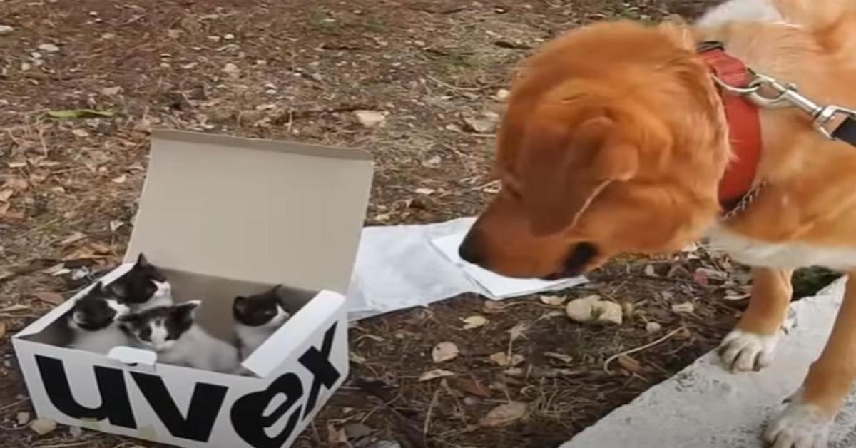 Aragon con scatola gattini