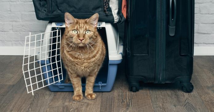 Gatto in partenza in aereo