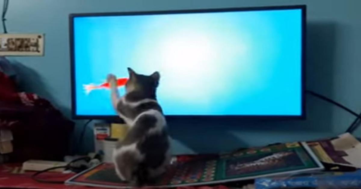 gatto gioca con gioco di pesci in tv