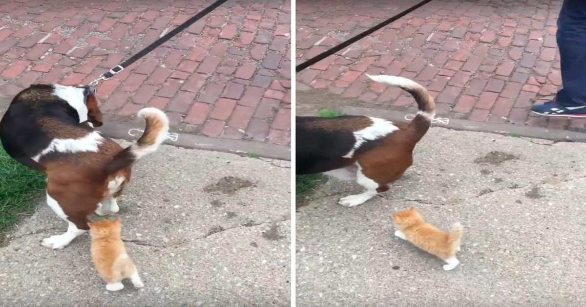 gattino segue un cane