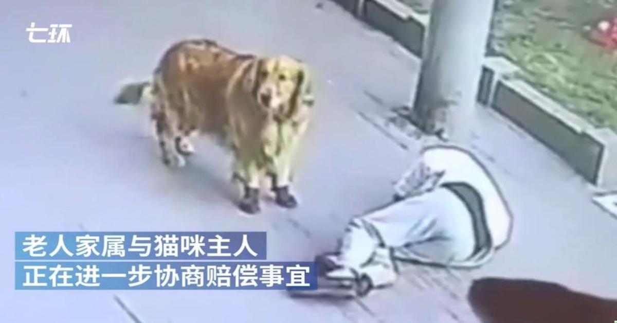 cane soccorre padrone colpito in testa da un gatto