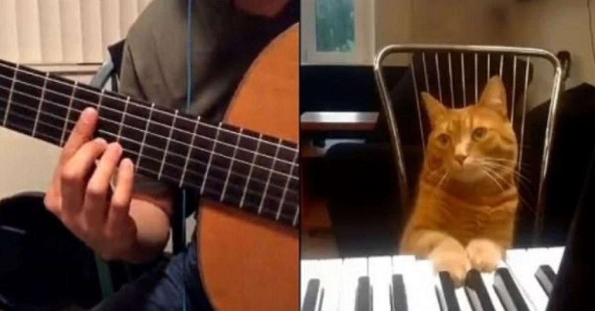 Barney gattino soriano video