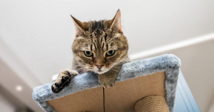 gatto in cima a un mobile