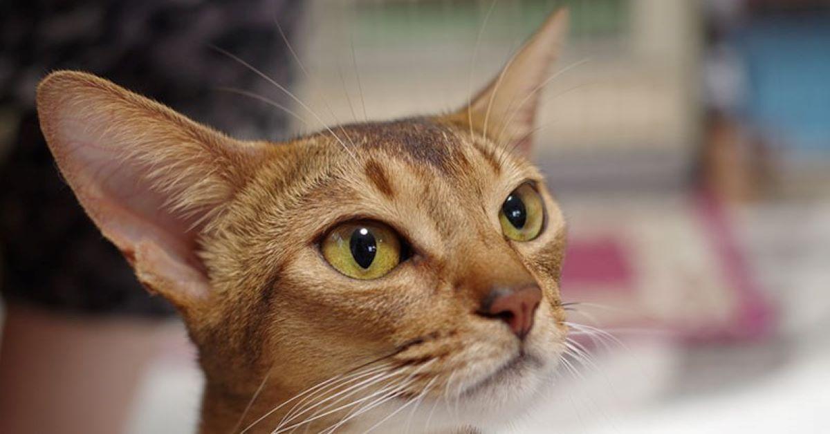gattino che fissa