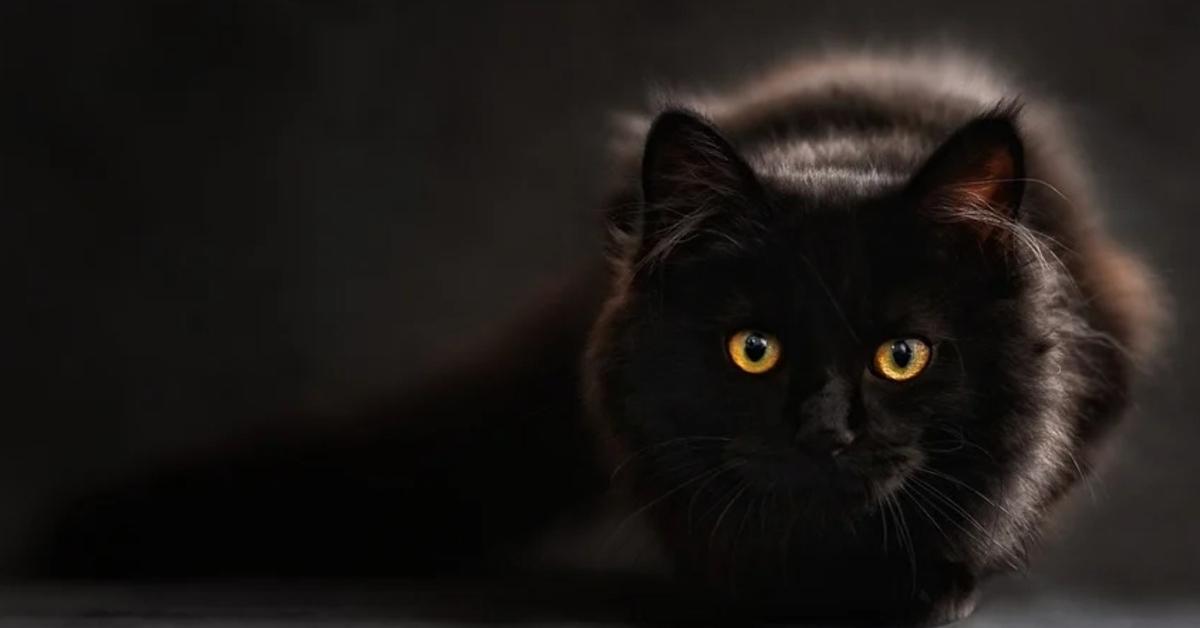 Ecco il reale motivo per cui si dice che i gatti hanno 7 vite ed è davvero interessante