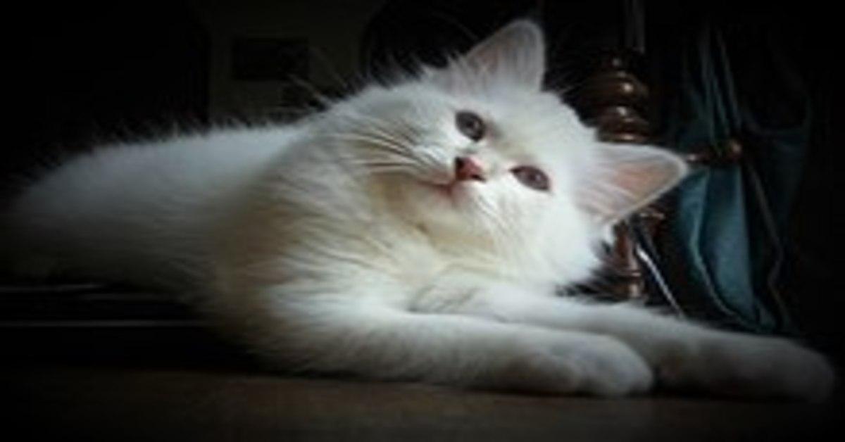 gatto fedele