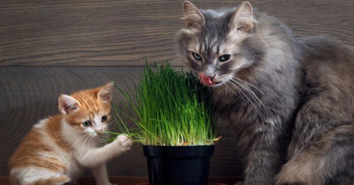 Ecco perché i gatti vanno matti per questa erba, il motivo è davvero affascinante