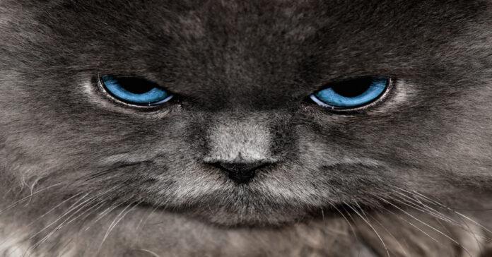 Ecco rumori e suoni che i gatti non possono sopportare: alcuni sono inaspettati