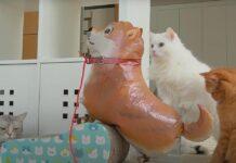 Gatti di fronte ad un palloncino a forma di cane