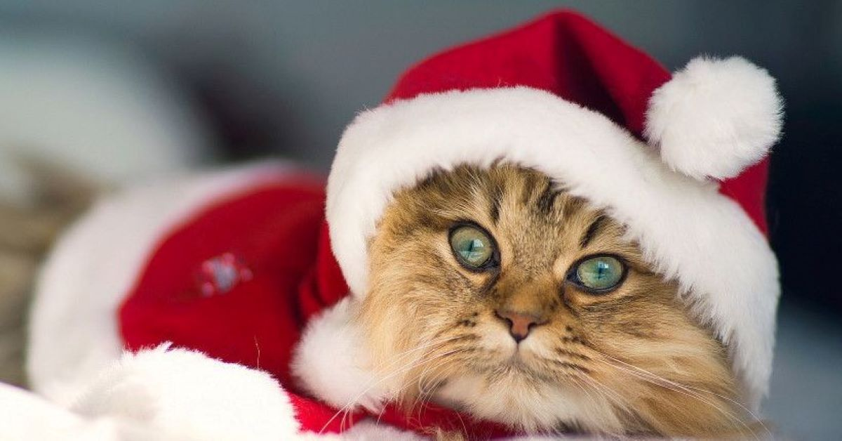 gatto travestito
